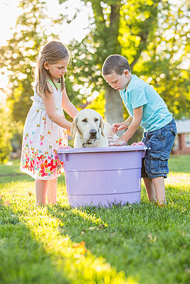 Caucasian brother and sister washing pet dog in backyard - p555m1421202 by Mike Kemp