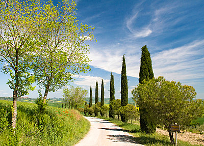 Traditional Tuscan landscape, near San Quirico, Valle de Orcia, Tuscany, Italy - p6511031 by Nadia Isakova photography