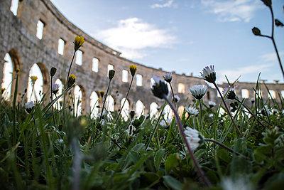 Gänseblümchen im Amphitheater - p703m1200260 von Anna Stumpf