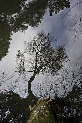 Reflection of tree in japanese garden - p798m1007815 by Florian Loebermann