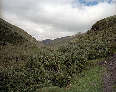 Berge in Ecuador - p945m1214555 von aurelia frey