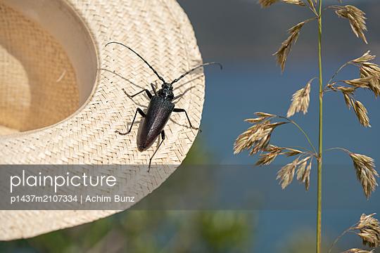 Beetle on straw hat - p1437m2107334 by Achim Bunz