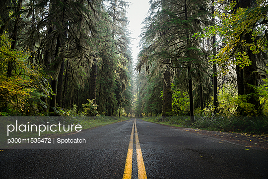 USA, Washington State, Hoh Rain Forest, Road - p300m1535472 by Spotcatch