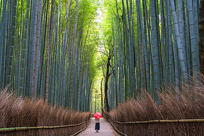 Rear view of woman carrying red traditional umbrella walking along a path lined with tall bamboo trees. - p1100m1520359 by Mint Images