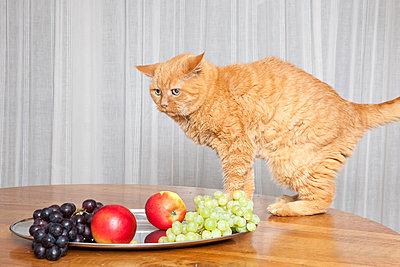 Stillleben mit Katze - p1514m2052880 von geraldinehaas