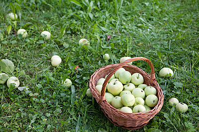 Still life apples - p4541507 by Lubitz + Dorner