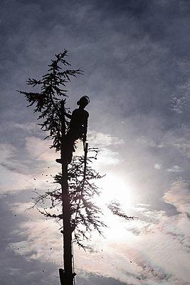 Man in a tree - p739m715431 by Baertels