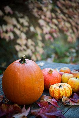 Stillleben im Herbst - p830m1008247 von Schoo Flemming