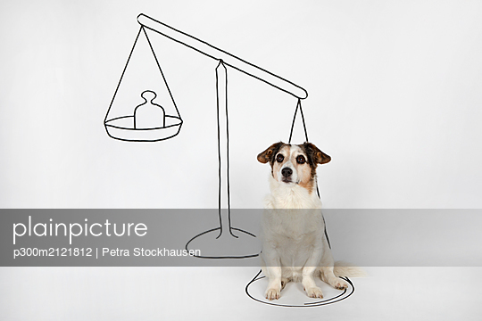 Portrait of mongrel sitting on drawn scale on white ground - p300m2121812 by Petra Stockhausen