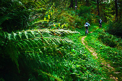 Two mountain bikers explores the trails of Chamonix valley, France. - p343m1090327 by Elias Kunosson