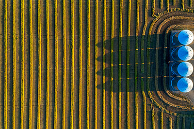View from directly above of four large metal grain bins and canola harvest lines at sunset with long shadows; Alberta, Canada - p442m1580443 by Michael Interisano
