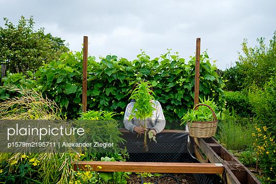 Female gardener behind giant lettuce plant - p1579m2195711 by Alexander Ziegler