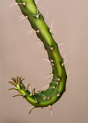 Cactus - p971m1451194 by Reilika Landen