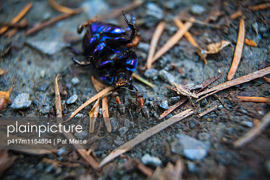Toter Käfer - p417m1154854 von Pat Meise