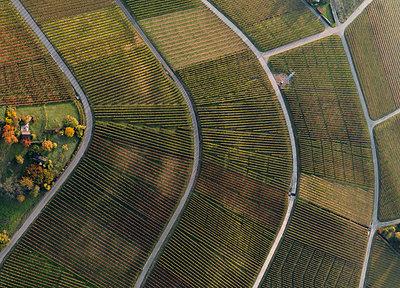 Full frame shot of vineyards in landscape during autumn, Stuttgart, Baden-Wuerttemberg, Germany - p301m1406272 by Stephan Zirwes