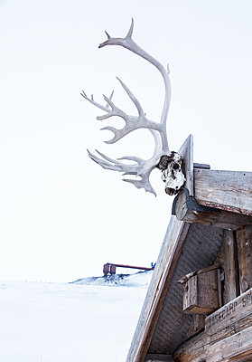 Horns on wooden hut - p312m1522003 by Lena Granefelt