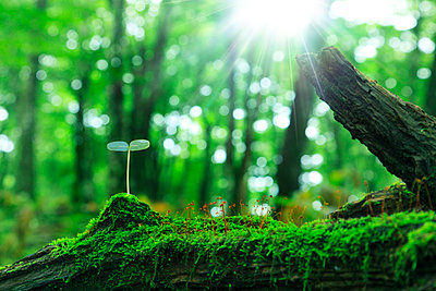 Leaf sprouting from a tree - p307m803414f by SHOSEI/Aflo