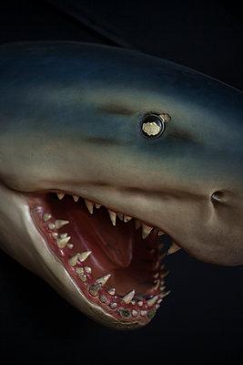 Shark - p1028m1502862 von Jean Marmeisse