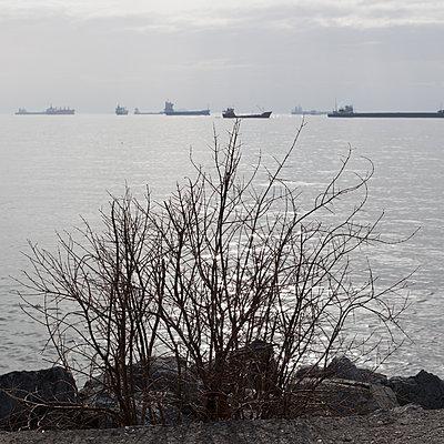 Strauch am Marmarameer - p1138m971482 von Stéphanie Foäche