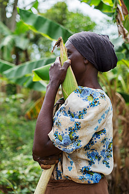 Africa, Uganda, African woman in the corn field - p1167m2283468 by Maria Schiffer