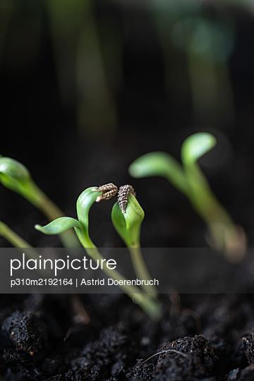 Seedlings - p310m2192164 by Astrid Doerenbruch