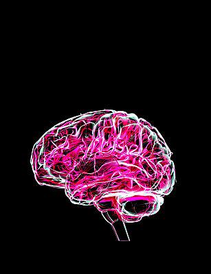 Gehirn - p1275m2168753 von cgimanufaktur