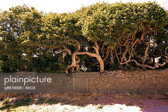 Bäume hinter Mauern - p8970006 von MICK