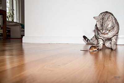Cat and mouse - p7390729 by Baertels