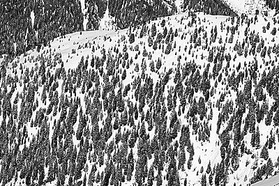 Austria, Tyrol, Ischgl, trees in winter landscape - p300m1068783f by Bela Raba