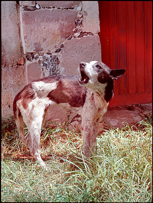 Hund in Mexiko - p9793334 von Ziegler