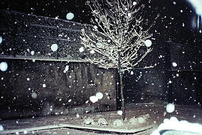 Schneefall - p1462m2146342 von Massimo Giovannini