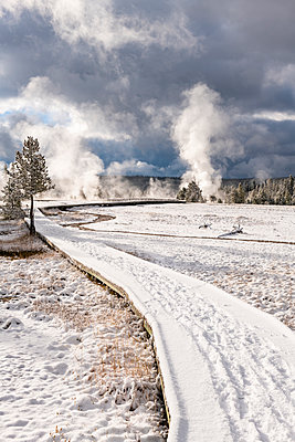 Yellowstone National Park, UNESCO World Heritage Site, Wyoming, United States of America - p871m2101253 by Jordan Banks