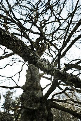 Old bare tree  - p1057m1222775 by Stephen Shepherd