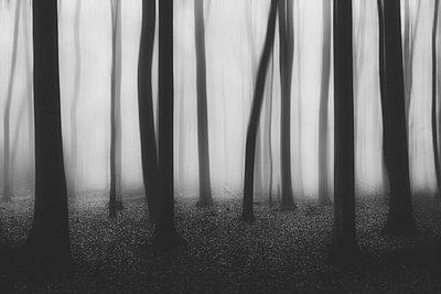 Mystischer Wald - p1696m2294463 von Alexander Schönberg