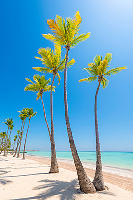 Juanillo Beach (playa Juanillo), Punta Cana, Dominican Republic. Palm-fringed beach. - p651m2006833 by Marco Bottigelli