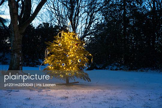 Weihnachtsbaum im Schnee - p1231m2253049 von Iris Loonen