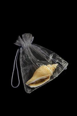 Seashell in a transparent bag - p1235m2056927 by Karoliina Norontaus