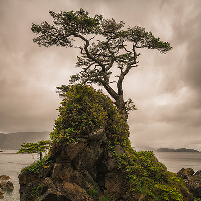 A tree stands alone on a rocky hill top along the shores of Haida Gwaii; Haida Gwaii, British Columbia, Canada - p442m1180065 by Robert Postma