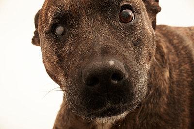 Attack dog - p8630014 by Philipp Schmitz