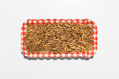 Edible insects mealworms - p1043m2122246 by Ralf Grossek