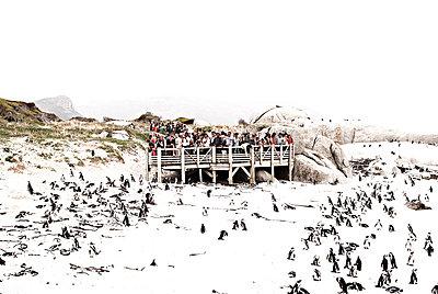 Birdwatching - p1089m855328 von Frank Swertz