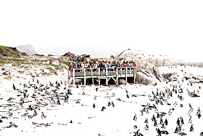 Birdwatching - p1089m855328 by Frank Swertz