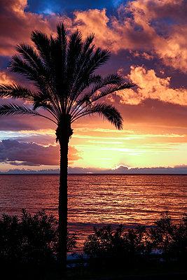 Single palm on the coast at sunset, Madeira - p1643m2229382 by janice mersiovsky