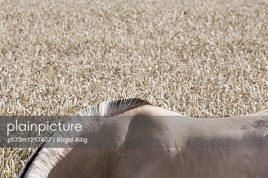 Pferderücken  - p573m1217407 von Birgid Allig