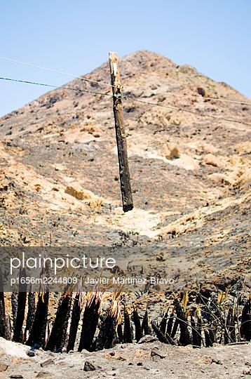 powerline,split wooden electric pole by a fire - p1656m2244809 by Javier Martinez Bravo