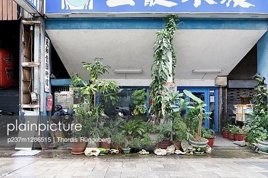 Fülle an Topfpflanzen vor einem Haus - p237m1286515 von Thordis Rüggeberg