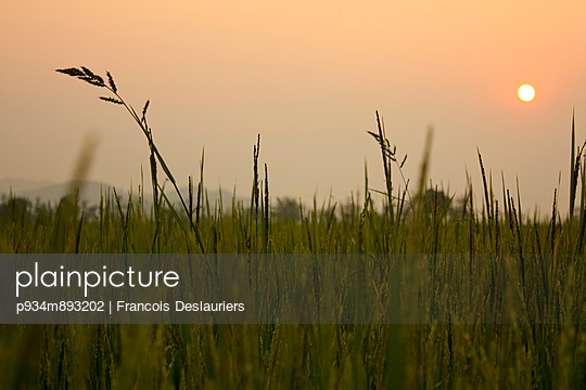 The sun sets over a rice field - p934m893202 by Francois Deslauriers photography