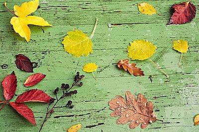 Waldblätter auf grünem Holz - p761m1190506 von Adeleida