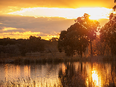 Trees at sunset - p1427m2038152 by WalkerPod Images