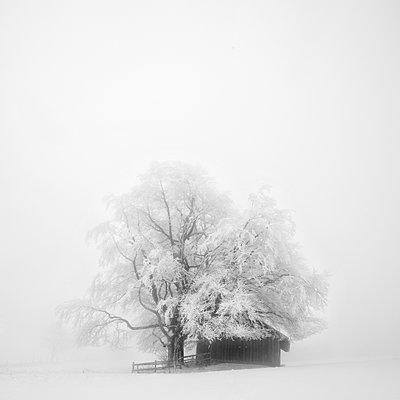 Hütte im Winter - p992m1214191 von Carmen Spitznagel